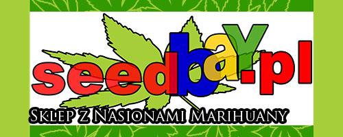nasiona marihuany, nasiona konopi, seedbank