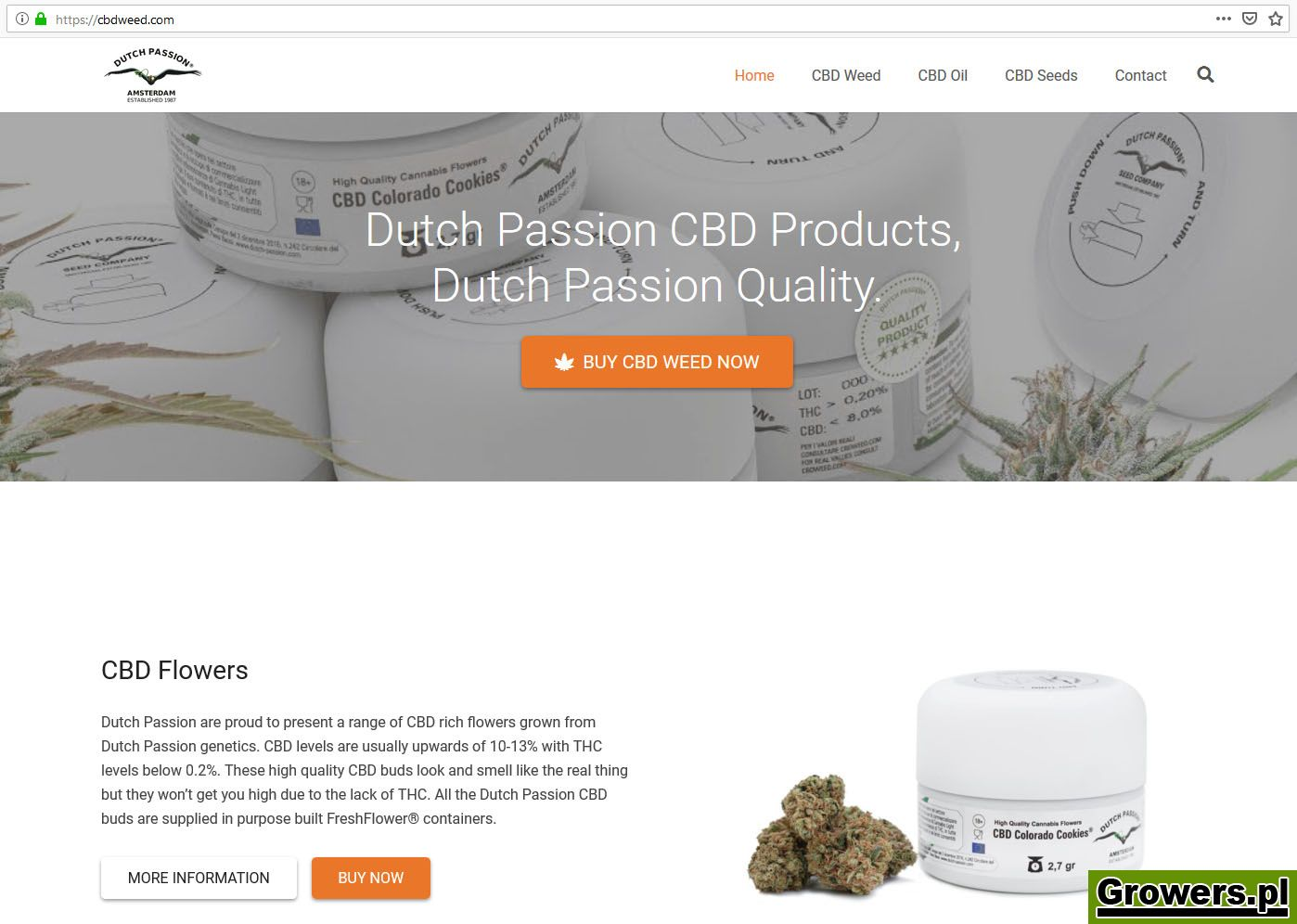 dutch-passion-cbd-weed-29502.jpg
