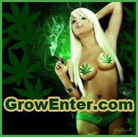 dyskusje o marihuanie, forum konopne, marihuana forum