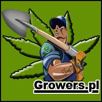 forum, dyskusje, uprawa, hodowla, marihuany, konopi, cannabis